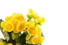 La donna che suicidava le piante: la vera storia di Bego edEgonia